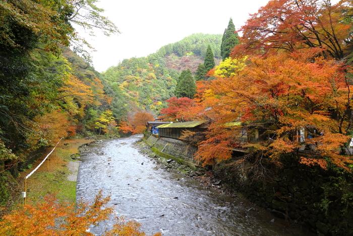 夏はホタルが乱舞し、雄大な自然が残されている高雄周辺は、「京の奥座敷」とも呼ばれており、清滝川には夏から秋にかけて川床が敷かれます。錦そのもののような高雄の紅葉を眺めながら、清滝川に敷かれた川床で京料理をいただくのもおすすめです。