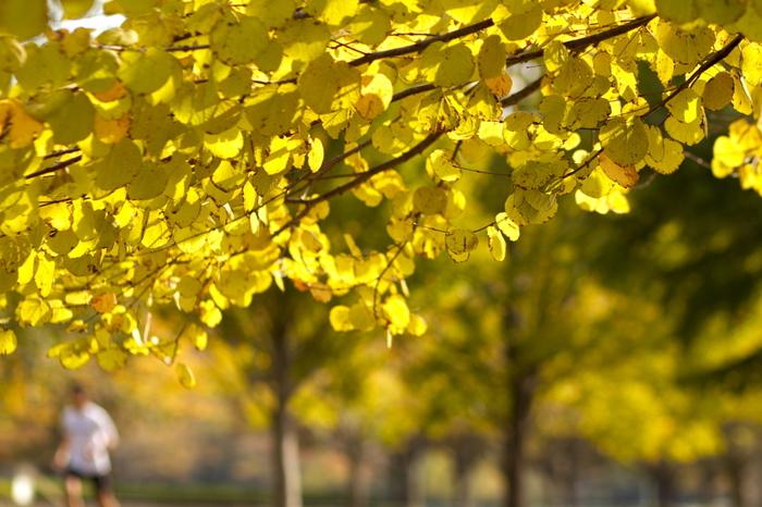 秋の爽やかな風を感じながらのランニングは気分も最高♪でも、走る時にはどんな格好が良いのか悩むところですね。そこでおしゃれで可愛いおすすめランニングアイテム&コーデをご紹介します。