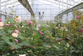 定番の花から、ちょっと見慣れない花まで。気持ちを明るくしてくれる花が、四季の移ろいを知らせてくれます。そのうえ、花屋の店頭でディスプレイされる期間が無いため、鮮度は抜群◎。