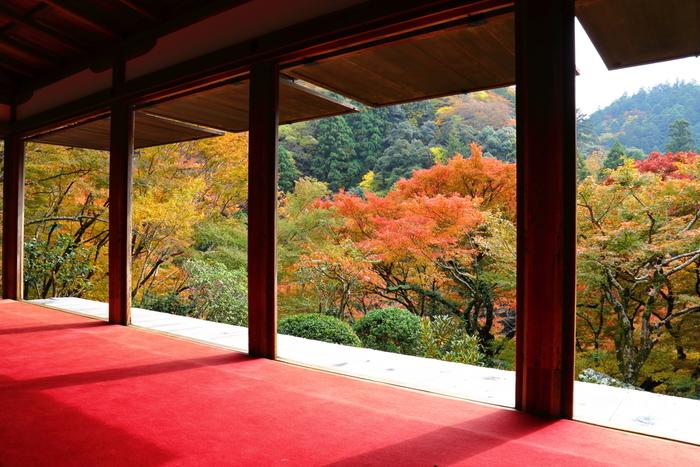 国宝に指定されている石水院から眺める眺望は絶景そのものです。鮮やかに彩った高雄山と、高山寺境内の華やかさが織りなし、まるで錦絵のような素晴らしさです。