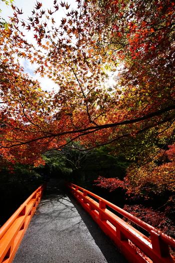 神護寺、高山寺とならび「三尾(さんび)の名刹」の一つに数えられる西明寺は、9世紀前半に創建された真言宗の寺院です。参道へと続く清滝川に架かる朱色の橋は、鮮やかに彩った周囲の樹々と調和し、見事な景観美を作りだしています。