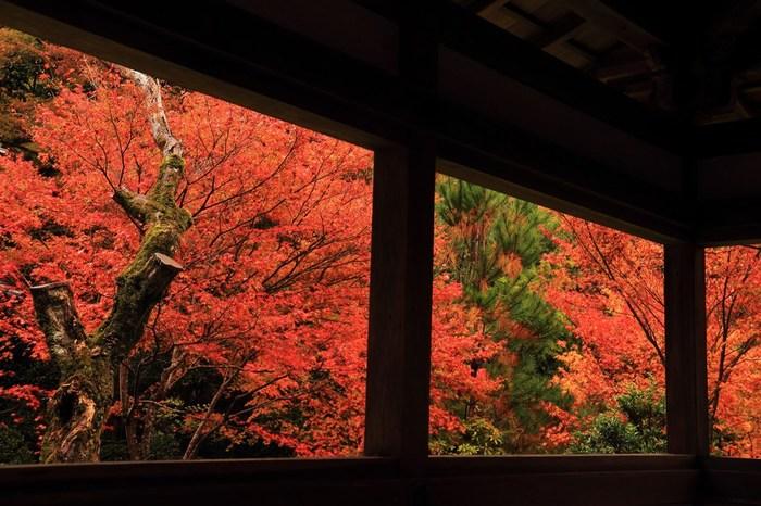 紅葉の名所として知られる西明寺庭園内の美しさは傑出しています。本堂を支える太い柱は、額縁のように見え、本堂内からは幾枚もの錦絵が並んでいるかのように庭園を望むことができます。