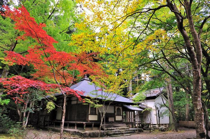 深い山奥に佇む高山寺境内は深山幽谷とした雰囲気が漂っており、山寺特有の魅力を放っています。