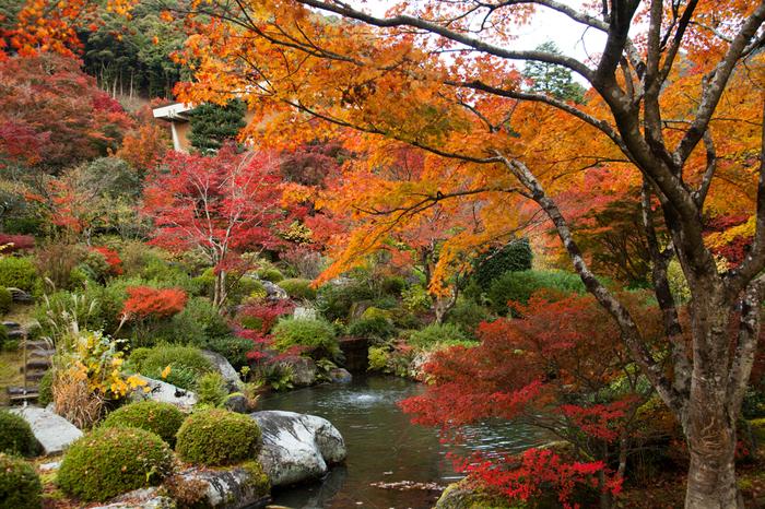 三室戸寺は、平安時代から貴族たちの間で、紅葉の名所としても親しまれていました。歌人・西行法師は三室戸寺の紅葉を「暮はつる秋のかたみにしばしみん紅葉ちらす三室戸の山」と称賛しています。