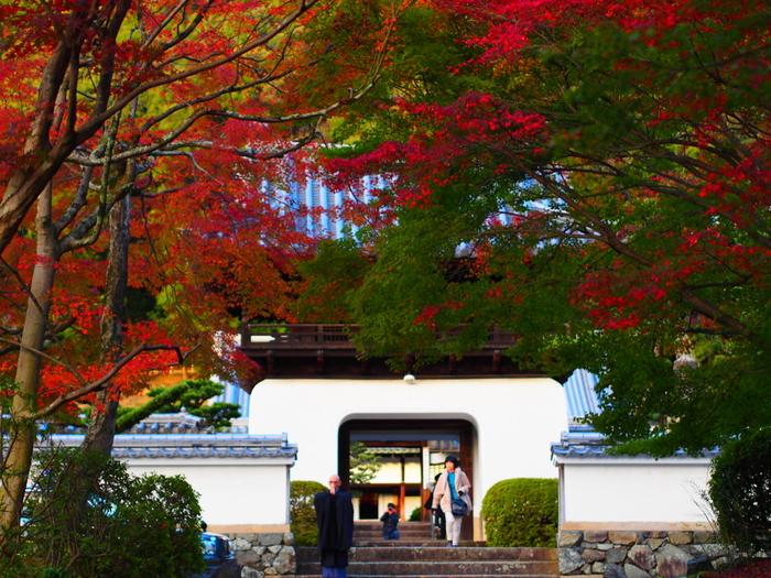 宇治川を挟んで平等院の北東に位置する興聖寺は、鎌倉時代初期に創建された曹洞宗の寺院です。宇治市有数の紅葉の名所として知られており、樹々が朱色に染まる晩秋になると大勢の参拝者がこの地を訪れます。