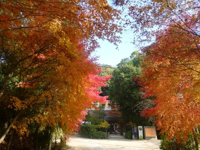 宇治上神社は、神社としてはそれほど大きくないものの、境内には様々な落葉樹があります。秋色に染まった樹々は、宇治上神社が持つ荘厳で静謐な雰囲気を引き立てています。