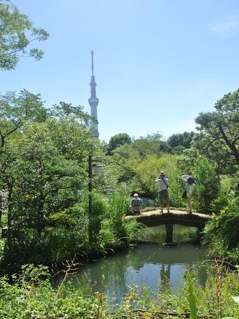 東京下町【向島】でまったりタイム♪お散歩途中に立ち寄りたいおすすめカフェ4選