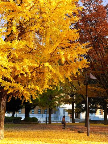 秋の心地よい風を受けながら走るのにオススメのポタリングコースをご紹介しました♪ ソラマチ、かっぱ橋、浅草寺など…見どころ満載の浅草・上野エリアで、新しい発見を探しに出かけてみませんか?