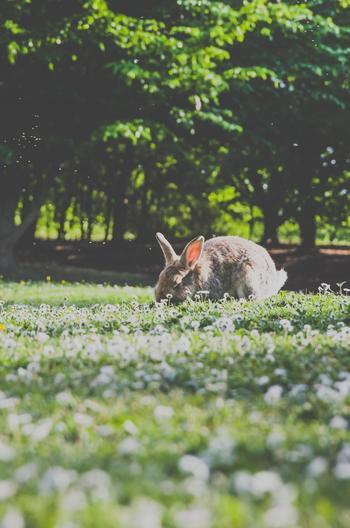 フランスやアメリカ、イギリスなどで知られているお守りといえば「ウサギの足」。特にウサギの後ろ足をキーホルダーのようにして持ち歩いている人も多いです。フランスでは成功をもたらすものとして、アーティストからの人気が高いよう。  ウサギの足はなんとも可哀そうだから、ここではウサギモチーフをご紹介します。ウサギ自身にも豊かさの意味があり、常に前に進むことから飛躍の象徴や、多産なことから子孫繫栄の意味もあります。