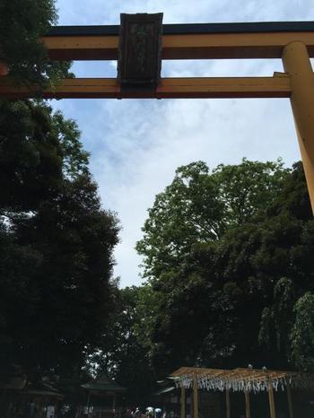 縁結びの神社として名高い、川越氷川神社。境内は女性の姿でいっぱいです。境内には高さ約15mにも及ぶ大鳥居がそびえ立ち、樹齢500年を超える木々が豊かに茂る、何ともココチよい空間が広がります。