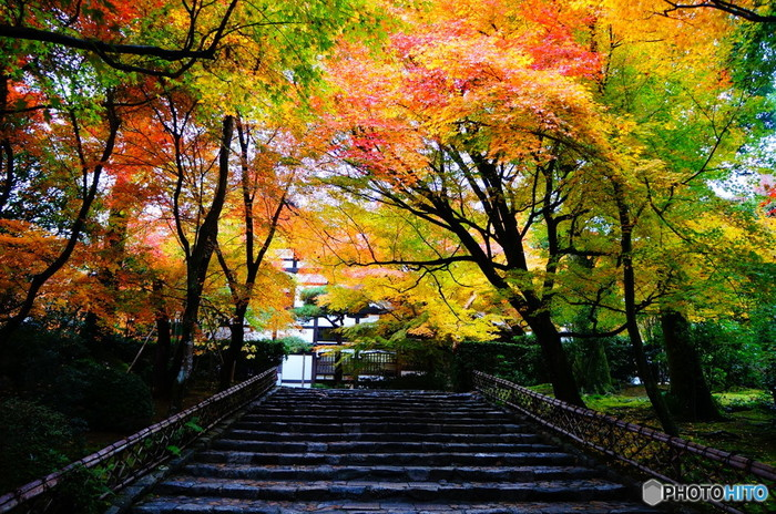山門へと続く石段の両横は、落葉樹の並木となっており、晩秋になると紅葉のトンネルのような姿となります。