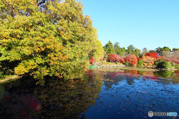 龍安寺境内にある鏡容池は、晩秋になると美しい姿へと変貌します。深紅、朱色、橙色、黄色に色付いた樹々と鏡容池と見事に調和した景色は、いつまで眺めていても飽きることはありません。