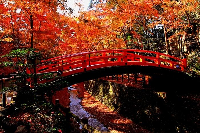 鶯橋周辺の美しさは格別です。朱色の鶯橋、鮮やか彩を見せるモミジ、散モミジで朱色、散紅葉で紅にそまった紙屋川が織りなし、一幅の掛け軸のような景色を作りだしています。