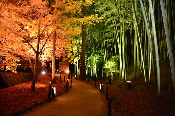 もみじ苑では、夜間拝観もあり、ライトアップが行なわれます。闇夜に浮かび上がる紅葉と青竹のコントラストは美しく、日中とは異なる幻想的な雰囲気を漂わせています。