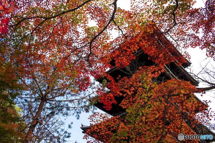 金閣寺、龍安寺と同様に「古都京都の文化財」として世界遺産に指定されている仁和寺は、888年に創建された寺院です。秋になるとモミジやカエデといった様々な落葉樹が鮮やかに染まり、洗練された優美さを持ち合わせる仁和寺境内の美しさに華を添えています。