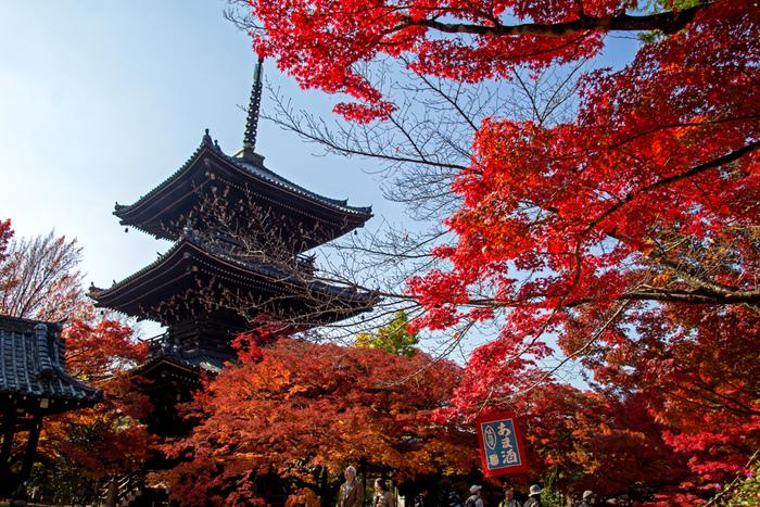 紅葉が見頃となる晩秋には、境内の樹々は燃え盛る炎のような深紅に染まり、三重の塔が持つ洗練された優美な魅力を引き立てています。