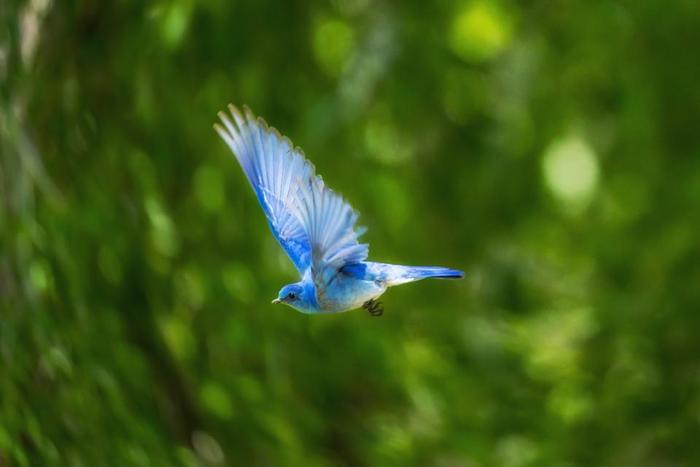 """""""幸せの青い鳥""""でお馴染みの「鳥」も、世界中で人気のラッキーモチーフです。鳥は飛べることから「飛躍」や「自由」の象徴として人気のモチーフ。特に日本では「鶴」が長生きの象徴として、古くからおめでたい席に欠かせなかったり、フクロウは森の賢者で「知恵」の象徴としてヨーロッパでは信じられています。"""