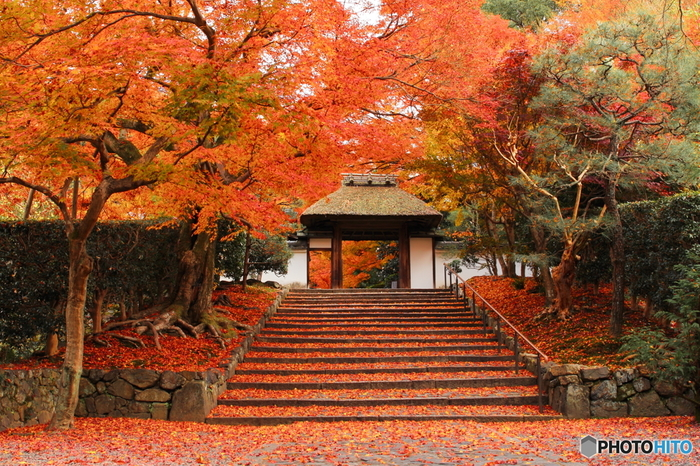 哲学の道と並行して南北に延びる細い路地から、安楽寺山門へと続く参道の美しさは格別です。並木となっている紅葉は、トンネルのように参道を覆い、参道に散らばる散紅葉は、まるでレッドカーペットのようです。