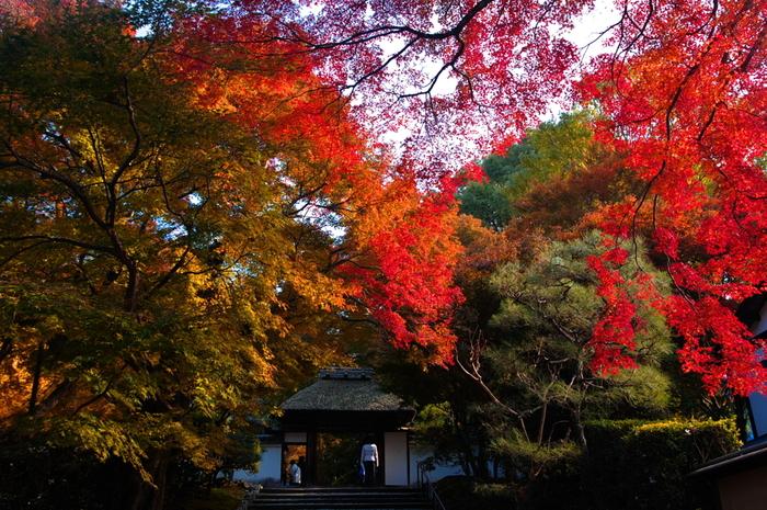 安楽寺は、いつも大勢の観光客で賑わう「哲学の道」から少し東側に位置する浄土宗の寺院です。通常は一般公開されていませんが、毎年行われる7月25日のかぼちゃ供養と、春と秋に一般公開が行われます。