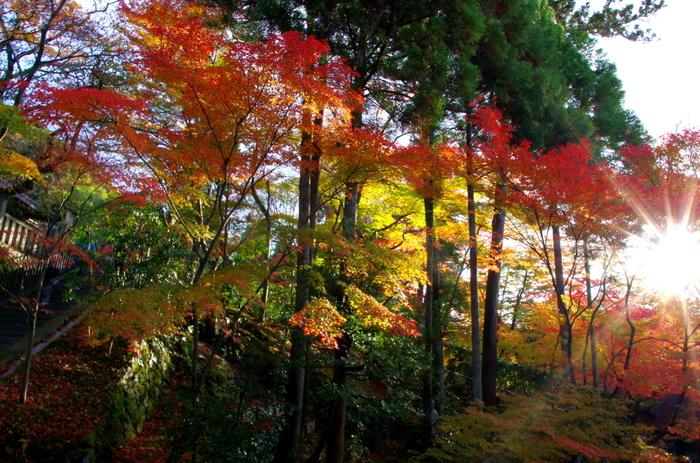 広い境内には、モミジに代表される落葉樹と常緑樹が混在しています。深紅、朱色、橙色、黄色に彩った落葉樹と常緑樹のコントラストは美しく、いつまで眺めていても飽きることはありません。