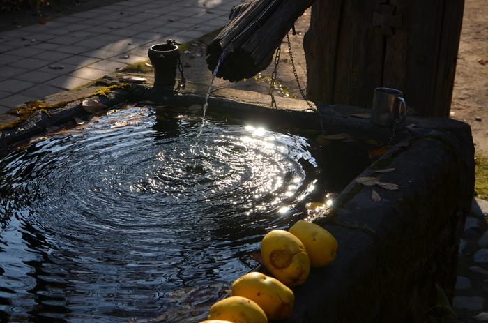冷たい地下水も湧いています。実際に飲むこともできるそうで、「杜江(もりえ)の水」と呼ばれています。