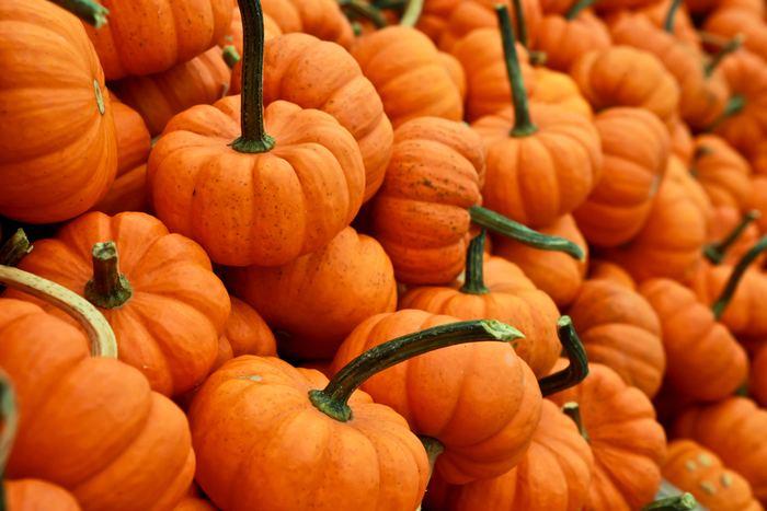 ぱっと目を引くオレンジは、持ってみると意外と使いやすいことに驚くかも。最初はカーキやベージュ、ブラウンなどのアースカラーやブラック、ホワイトのモノトーンカラーに合わせてみて。