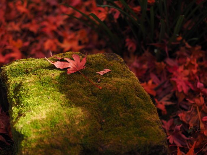 【保存版】今年の見頃はいつ?秋の鎌倉散策へ<紅葉の名所・見所案内マップ>