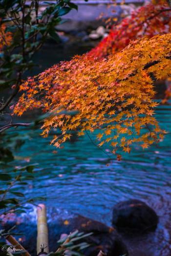赤・黄・緑・青…自然の中にこんな鮮やかな色を見られる瞬間があるのですね。