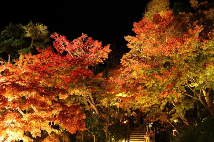 紅葉した銀杏、もみじ、ケヤキ、カエデが、出迎えてくれます。 ライトアップの時間は、日没~18:00閉門で、18:30閉山しますので、ご注意下さい。