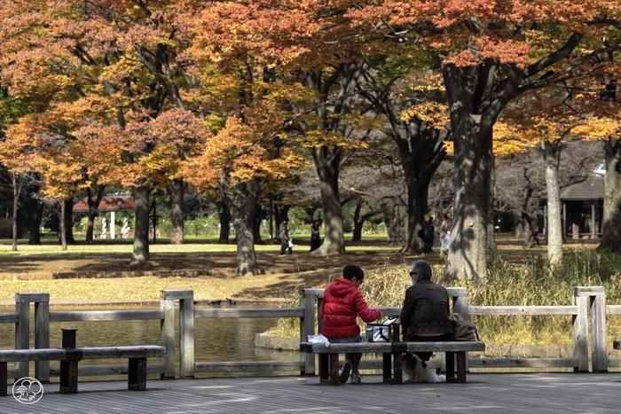 だんだんと涼しくなって、お出かけにぴったりの季節がやってきましたね。天気のいい日には、のんびり公園でピクニックするのはいかがでしょうか。東京は意外にも自然豊かな場所がたくさん!今回は都内おすすめの公園と公園近くのパン屋さんをご紹介します♪