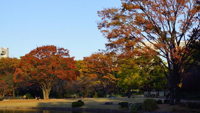 桜の名所として人気の北の丸公園ですが、紅葉も見事。都会にいることを忘れてしまうほど、自然をめいっぱい感じることができますよ。