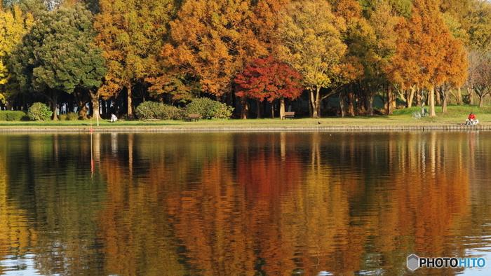 東京都葛飾区にある都内最大の水郷公園「水元公園」。敷地が約92ヘクタールもあり、園内には高さ20mのポプラが並ぶ並木道やキバーベキュー広場などたくさんの見どころがあります。