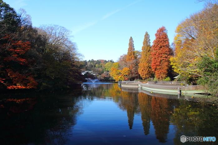 吉祥寺駅から徒歩5分というアクセスの良さが魅力の「井の頭恩賜公園」は、今年開園100周年を迎えました。公園は大きな池を囲むように作られており、池に沿って遊歩道があります。30分くらいで一周できますので、ちょうどよいお散歩コースですね。