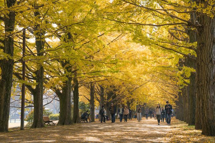最後にご紹介するのは、季節ごとのイベントなども盛んな「国営昭和記念公園」。広い園内はのんびり歩いて回るのも、レンタサイクルや園内専用列車「パークトレイン」に乗るのもおすすめ。『西立川口』から続くいちょう並木は見事なので、是非経ち寄ってみてくださいね♪