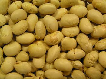 大豆の栄養を受け継いだ豆乳は、健康や美容などいろいろな側面から注目されている素材。植物性のたんぱく質を摂ることができ、大豆に含まれる脂肪酸はその約80%が、体に有益な成分とされるリノレン酸やリノール酸などの不飽和脂肪酸です。また、ビタミンB群、ビタミンE、マグネシウム、カリウム、鉄などのミネラル類、オリゴ糖、レシチン、サポニン、などさまざまな栄養素がつまっています!