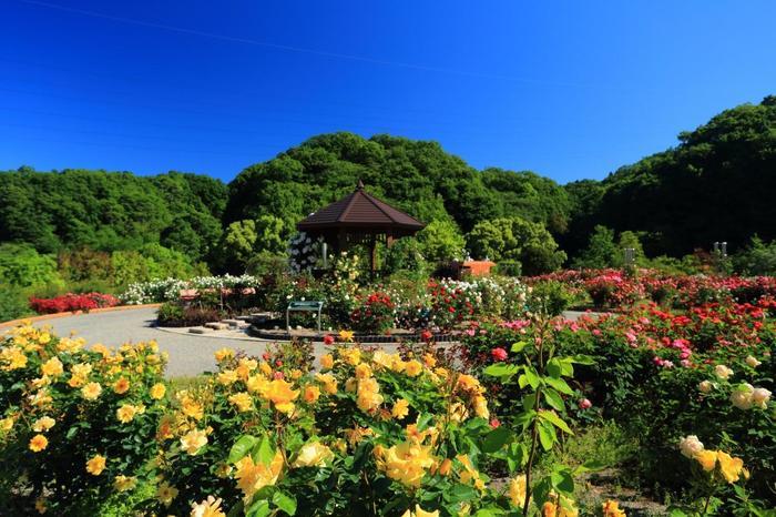 花フェスタ記念公園について少しだけ。名古屋からも高速ですぐ行けるので休暇にぜひ行ってみませんか? 世界最大級のバラ園が広がる光景はとても素敵です。この一角にとても小さいですが、ターシャの庭があります。