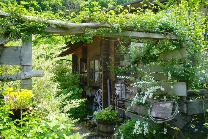 周りに生えている草花も世界観がよく出ている「ターシャの家(通称)」。季節ごとに変わる草花が何度訪れても新鮮です。