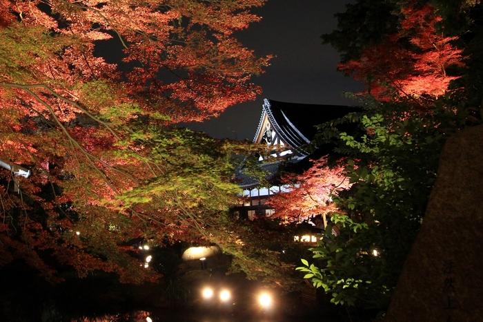金戒光明寺では、紅葉の時期になると夜間拝観が開催され、ライトアップが行われます。闇夜に浮かび上がる方丈庭園は、幻想的な雰囲気が漂い、その美しさは傑出しています。