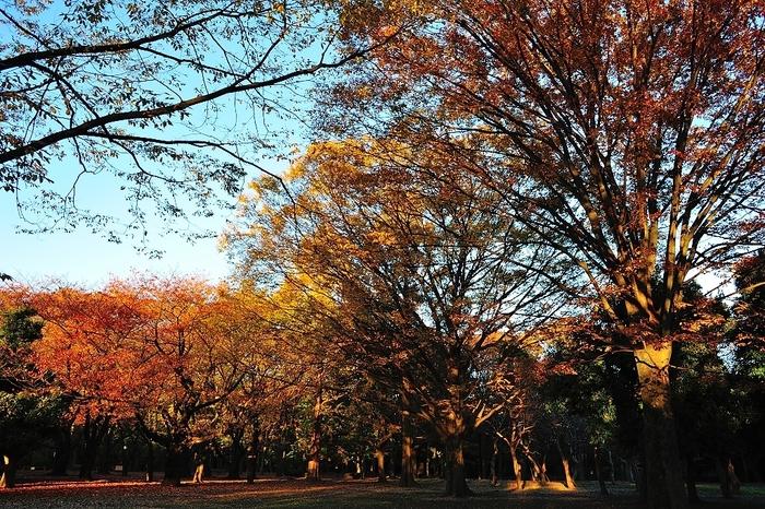 都内の緑豊かなスポットといえば、JR原宿駅から徒歩5分の所にある「代々木公園」。都会のビルが立ち並ぶ中に、驚くほど豊かな自然が広がっています。多くの人が訪れる人気の公園ですが、とても広いのでのんびりとした時間を過ごせますよ。