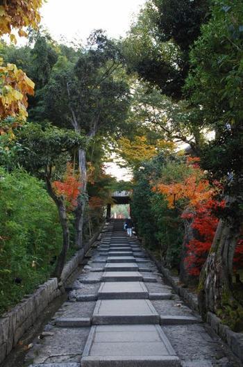 「台所坂」と呼ばれるこの坂を上がれば「高台寺」です。