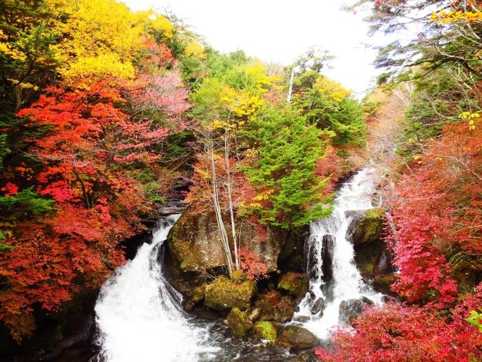 日本屈指の紅葉スポットとしても知られている日光周辺は、秋になると色とりどりに染まる景色が楽しめます。こちらは、湯元温泉と中禅寺湖の間にある景勝地の「竜頭ノ滝 」。210メートルの流れる滝と紅葉は、まさに絶景です。