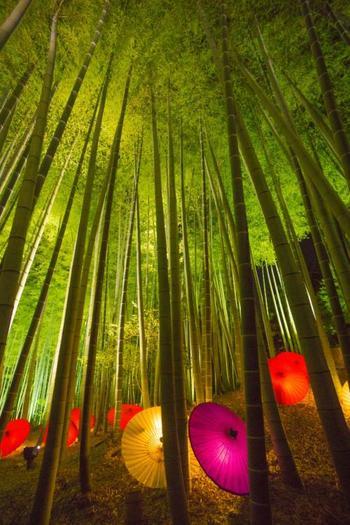 「竹林のライトアップ」も美しいですね。  2017年10月21日(日)~12月10日(日)までの夜間特別拝観では、毎年趣向を凝らした「プロジェクションマッピング」も行われます。2017年のテーマは「輪廻」。