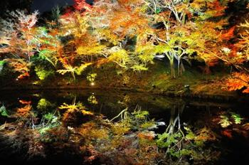 「臥龍池」に鏡面のように映り込む紅葉が綺麗です。夜の「ライトアップ」で一段と幻想的な雰囲気に。  昼間のチケットで夜間もう一度入りなおすことはできないので、夜間の「ライトアップ」がお目当てなら、日が落ちてから入るのがおすすめ。