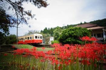 窓付と窓なしの列車があるので、天気が良い日は秋風を感じる窓なしがおすすめです。曼珠沙華、コスモス、イチョウなど、秋の風景をのんびりとトロッコ列車に揺られて楽しみましょう♪