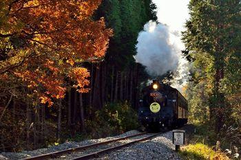 栃木県の茂木から茨城県の下館区間を走る真岡鉄道のSL蒸気機関車。紅葉の景色をレトロな列車に乘れば、タイムスリップしたかのような気分が味わえること間違いナシ!