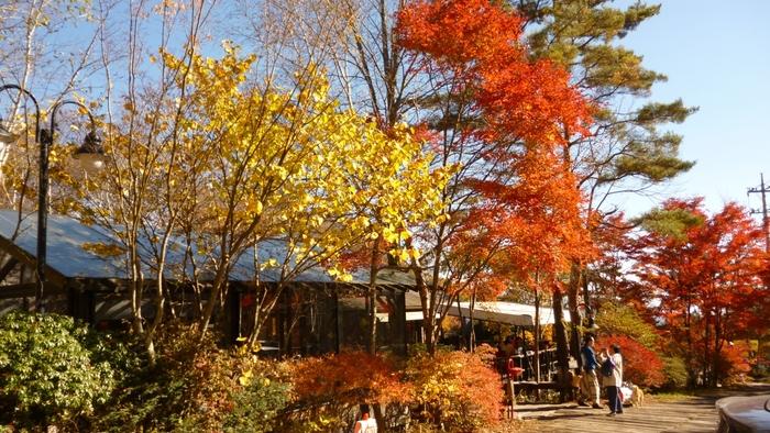 春は新緑、秋は紅葉とさまざまな表情を楽しめる森。青空に映える赤や黄色の葉っぱに思わず見とれてしまいそう。