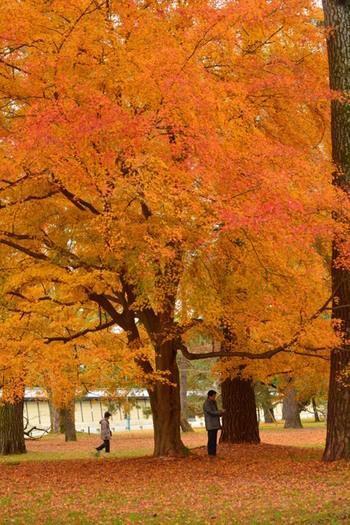 紅葉狩りも楽しいさわやかな秋。京都のおすすめ「お散歩コース」と楽しみ方3選