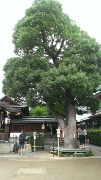 樹齢推定300年のご神木の樹皮に、そっと手をふれてみる人も。