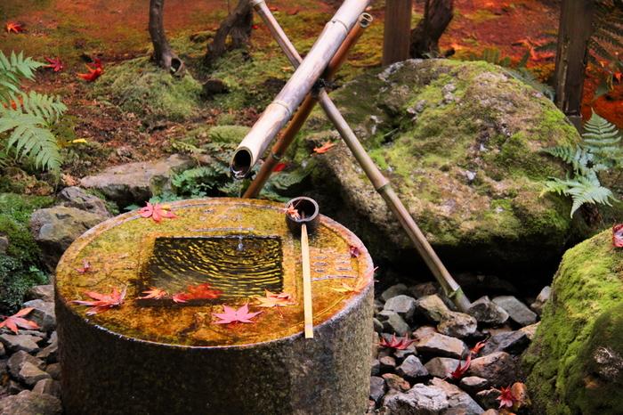 龍安寺の魅力は、石庭だけではありません。方丈庭園と反対側に位置する茶室蔵六庵にあるつくばいは、「吾唯足知」と読めるようになっており、禅の文化を参拝者に伝えています。つくばいに溜まった透き通った水に、深紅に紅葉した散紅葉が浮かぶ様は、まるで天然のガラスオブジェのようです。