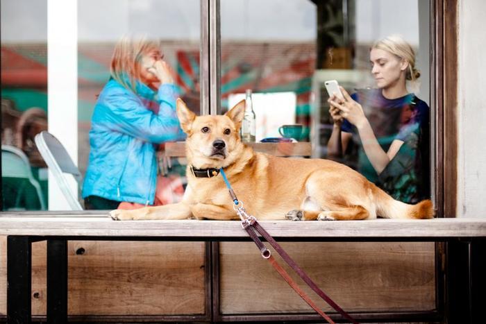 ペットのオーナー同士で、旅行などの際にお互いのペットを預かるという相互シェアのサービスも。